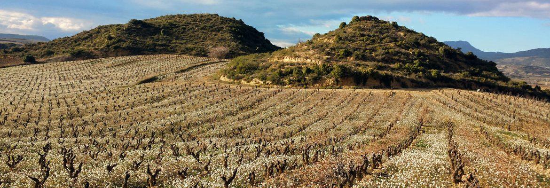 Nuestros Viñedos en Rioja Alavesa